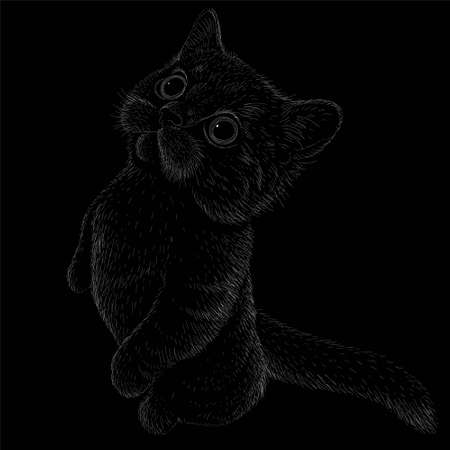 Cat vector art illustration T-shirt apparel tattoo design or outwear. Cute print style kitten background. This hand drawing would be nice to make on the black fabric or canvas Иллюстрация
