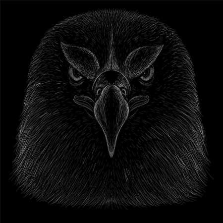 eagle, bird, falcon, falconry, crow, vector, illustration, head, patriotic, patriot, print, design, animal, hunting, t shirt, design, isolated, old, drawing, graphic, painting, black, halloween, natura Иллюстрация