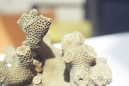 Close up shot of dead coral that look like brain or bee hive