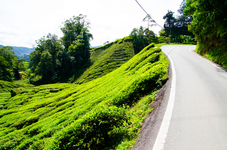 Tea plantations in Malaysia Stock Photo
