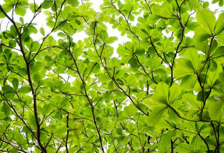 Achtergrond van de boom bladeren - uprisen hoek Stockfoto