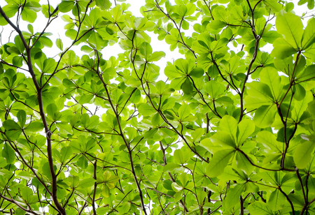 Background of tree leaves - uprisen angle