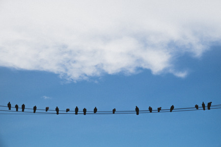 birds on a wire: Birds on an electric wire with blue sky - grainy style photo