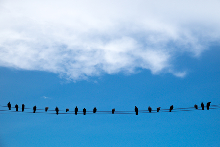 fragile peace: Birds on an electric wire with blue sky