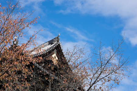 Leafless tree with background of Japanese temple and blue sky Banco de Imagens