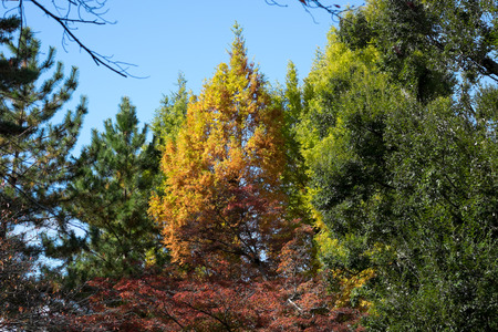 Three colors of tree, green, yellow, and red Banco de Imagens