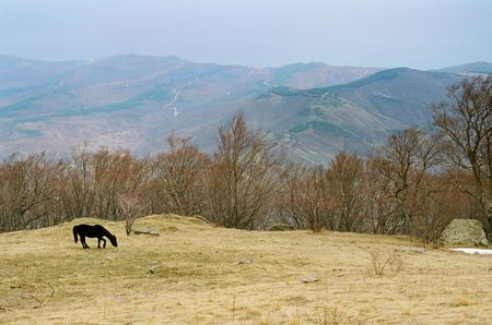 Lonely horse on the mountainside. photo