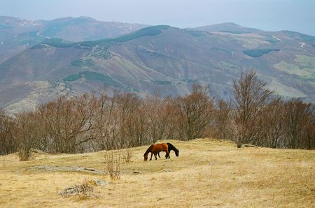 Two horses on the mountainside. photo