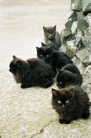 tough luck: Many black kittens sitting on the ground.