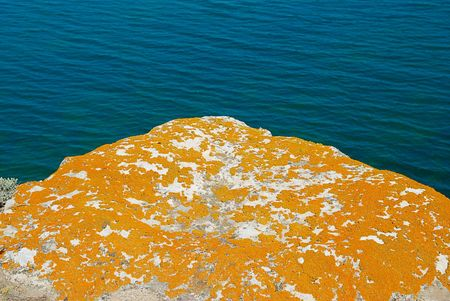 Texture of lichen on the stone and the sea. photo