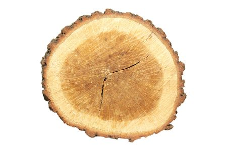 Wooden stump isolated on white. Stock Photo - 3922657
