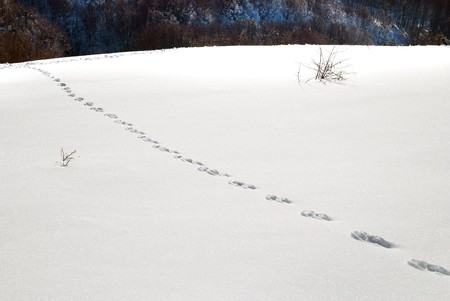 Winter, deep snow and  footprints. photo