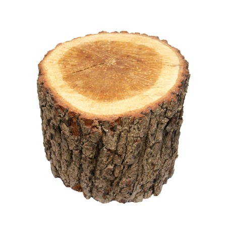 Wooden stump isolated on white. photo