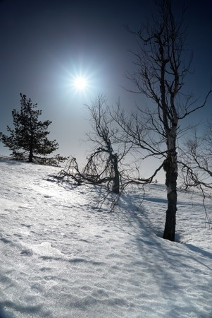 Trees under snow with sunshine star. photo