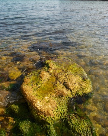 A big stone with green marine algae. Stock Photo - 4389202