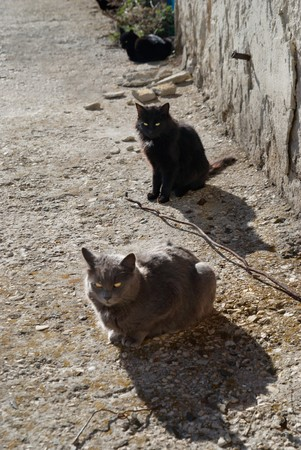 Gray and black cats sitting on the ground. photo