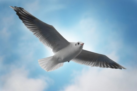 Seagull on the blue background. Stock Photo