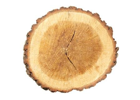 fin d annee: Souche isol�e sur le bois blanc. Banque d'images
