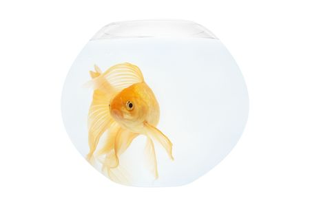 A golden fish in aquarium isolated on white. photo