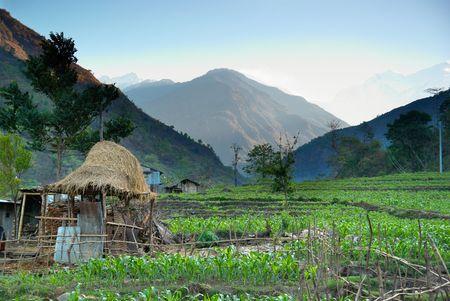 Green rice fields landscape in Nepal hills. Stock Photo - 4993145