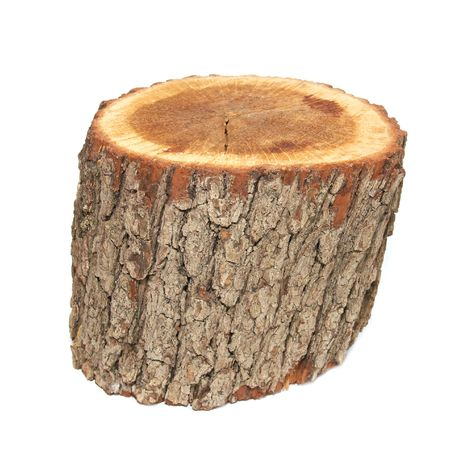 Wooden stump isolated on the white background. photo
