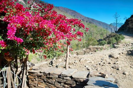 Red flowers in Tibetan village and Himalayan mountains.  photo