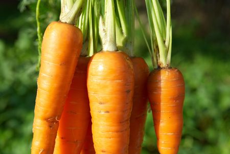 Bunch of carrots with green soft background photo