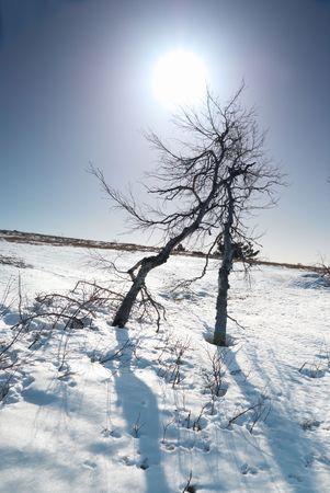 Trees under snow with sunshine star. photo