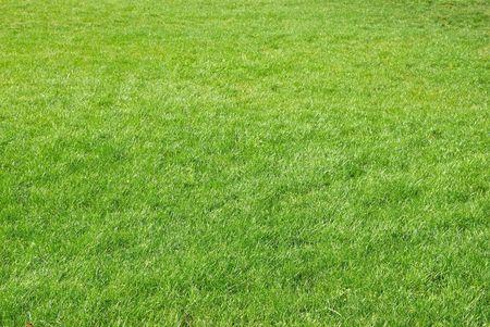 tiefe: Green Gras Textur für den Hintergrund verwendet werden