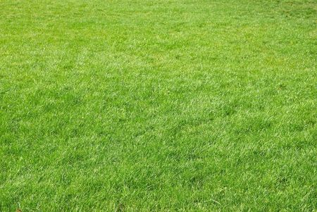 cut grass: Green grass texture can be used for background Stock Photo