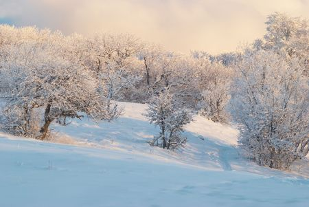 Winter icy forest photo