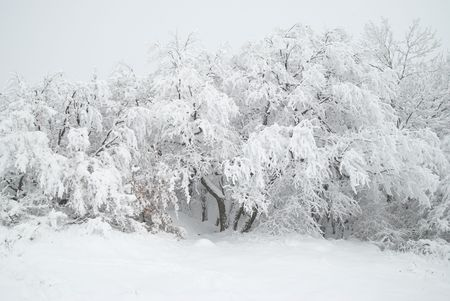 Winter forest- snow and beautiful icy trees photo