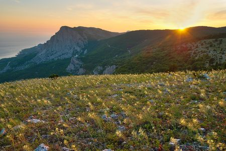 Mountains and the field of yellow flowers. Sunset. photo