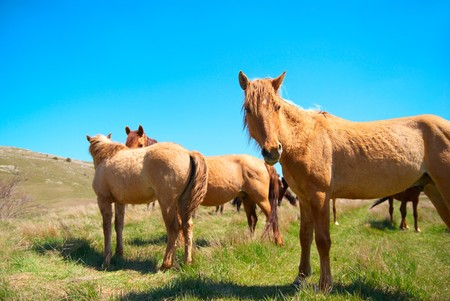 Herd of horses on the field with blue sky photo