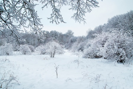 Winter icy forest with beautiful trees Stock Photo - 8542413