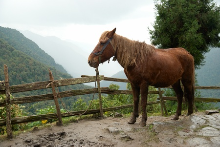 Red horse in the farm surrounding by forest photo