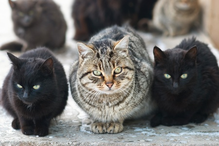 stray: Group of cats sitting and looking at camera