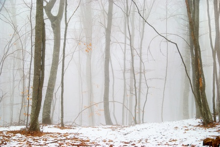 Winter snowy forest in the dense fog. Stock Photo - 9342090