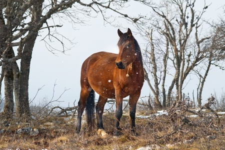 Rojos caballos en el campo. Paisaje salvaje. Foto de archivo - 9342030