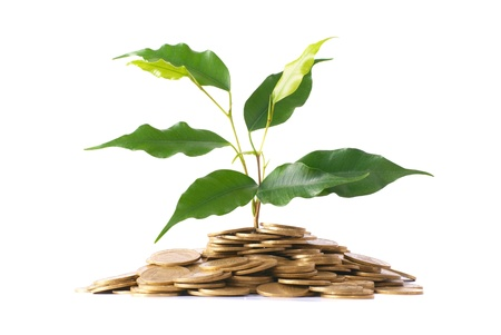 Green plant growing from the coins. Money financial concept. photo