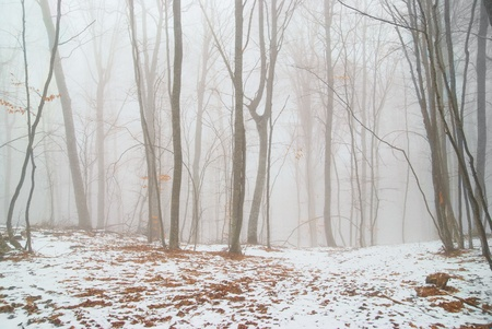 Winter snowy forest in the dense fog. photo