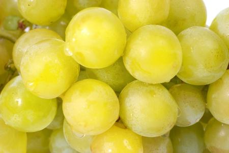 White grapes with water drops. Studio macro shot photo