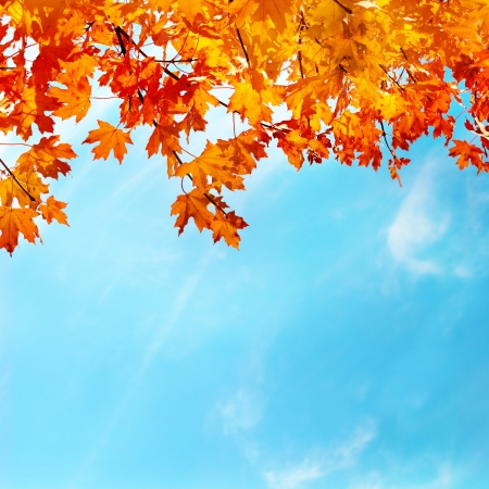 sky background: Autumn leaves with the blue sky background