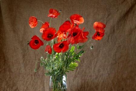 Poppies in the vase against dark grunge background photo