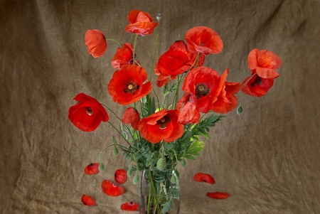 Poppies in the vase against dark grunge background photo