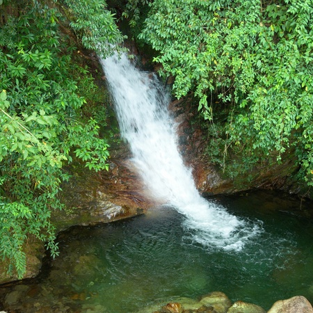 Waterfall in the forest surrounded by green trees photo