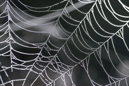 Spider web with shiny drops of water photo