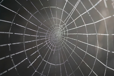 cobweb: Spider web with shiny drops of water
