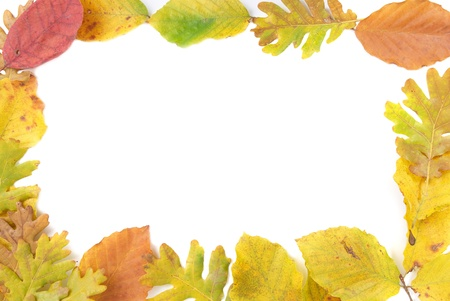fall leaves border: Frame from the autumn leaves isolated on white background