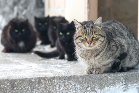 Group of cats sitting and looking at camera photo